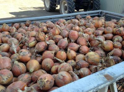 収穫されたスマイルボール