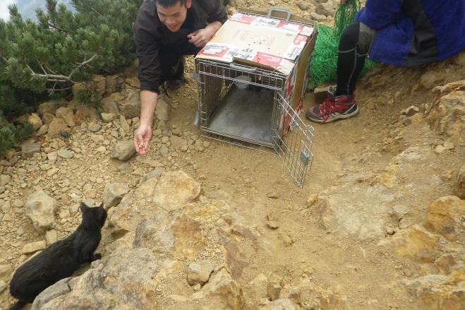 黒猫が無事に保護された瞬間=藤森周二さん提供