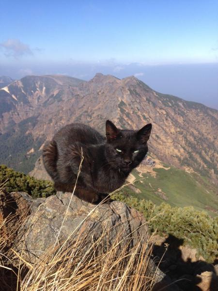 赤岳山頂付近にいた黒猫