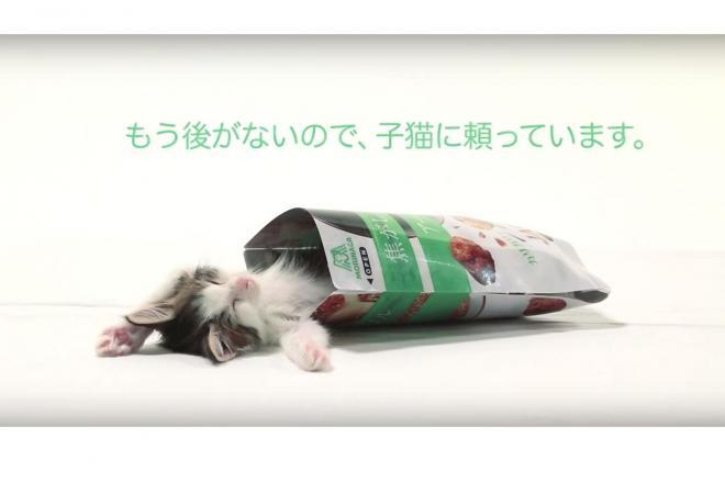 「もう後がないので、子猫に頼っています」。商品と無関係な猫が商品をPR