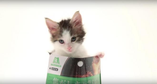ホームページで公開されている動画「猫ジャック」の一場面