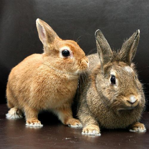 ひぐち君のウサギ=2009年3月