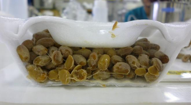 「金のつぶ パキッ!とたれ とろっ豆」容器の断面