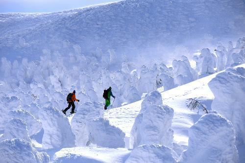 見ごろを迎えた蔵王の樹氷=2014年1月30日