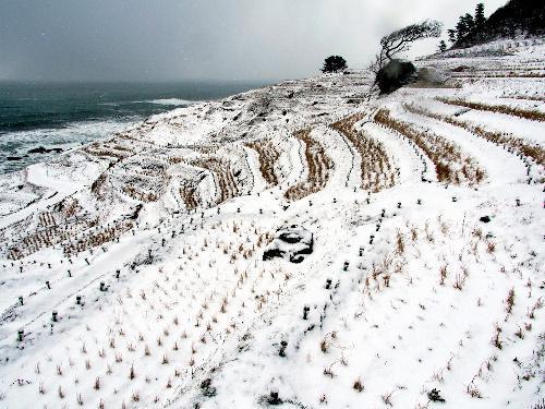 うっすらと積もった雪であぜが白く浮かび上がった千枚田=2014年2月