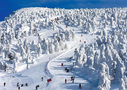 山形市の「蔵王温泉スキー場」で見ごろを迎えた樹氷=2014年1月30日