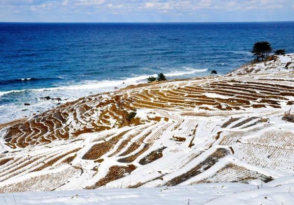 雪をかぶって美しい景観を見せている「白米の千枚田」=2011年1月25日