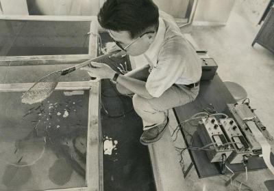 ナマズによる地震予知の研究に取り組む東京都水産試験場の職員=1977年7月13日