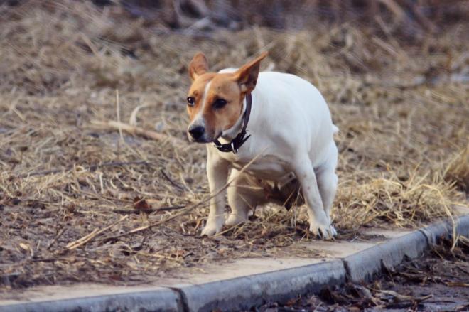 犬のフン被害もアプリからの通報で解決!?