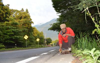 車にひかれたアナグマを調べる舟津さん=2015年6月23日午前5時10分、富士宮市の国道139号