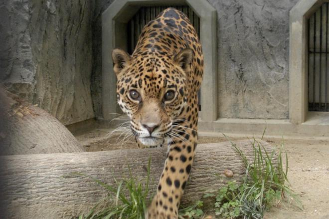 アスカを残して逝ったチャゲ=東山動植物園