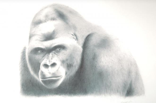 シャープペンで描かれたゴリラの「シャバーニ」