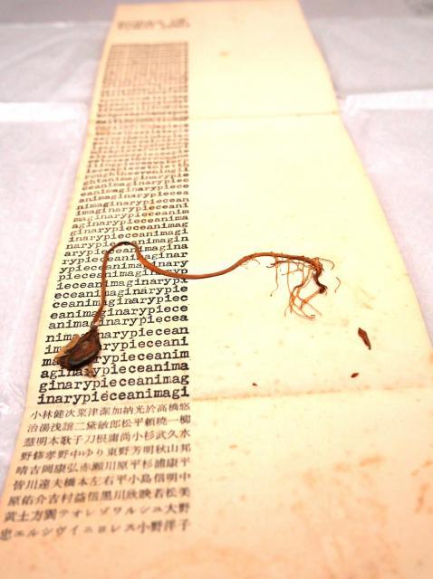 モヤシの貼り付けられた案内状=東京・三田の慶応大アート・センター