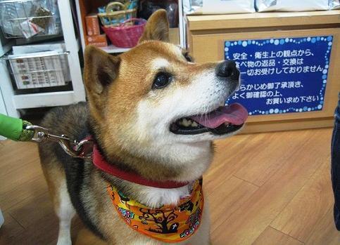 引き取り手が見つかった犬