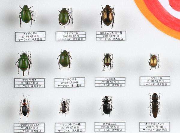 津市内のコンビニ店で採集された昆虫の標本
