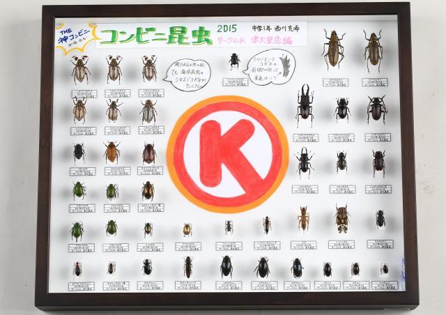 採集できた昆虫で1ケース埋まってしまうほど、たくさんの昆虫でいっぱいだった「サークルK 津大里店」