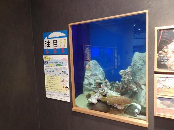 白いウツボが展示されている水槽
