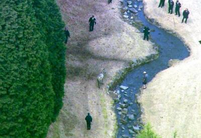 ゴルフ場に逃げ込んだシマウマを捕獲しようとする警察官ら=岐阜県土岐市、メ~テレ提供