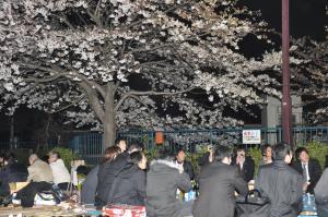 掃部山公園で花見を楽しむ人たち=2008年