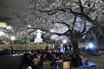 夜桜を楽しむ人たち(記事とは関係ありません)=4月、横浜市の掃部山公園、軽部撮影