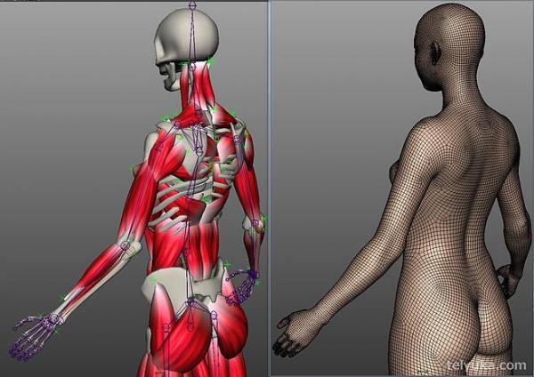 筋肉の作りも考慮して制作している=TELYUKA提供