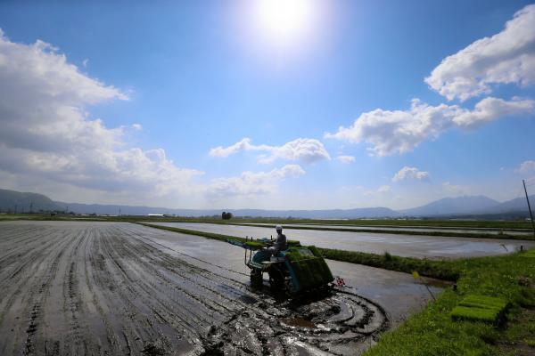 熊本地震で田んぼに亀裂が入ったり、水路が壊れたりした熊本県阿蘇市で田植えが始まっている。黒川地区の佐藤邦博さん(41)の田んぼも水路が壊れ、4月30日にようやく水を入れることができた。だが、別の田んぼでは水路が修復されず田植えはあきらめている。周囲では、放置された田んぼが多く見られる。佐藤さん一家6人は地震後?日間ほど車中泊で過ごした。この日は家族総出で田植
