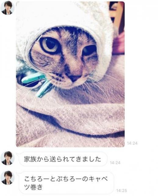 佐藤健さんの公式LINEに投稿された実家の飼い猫「ぷちろー」の写真