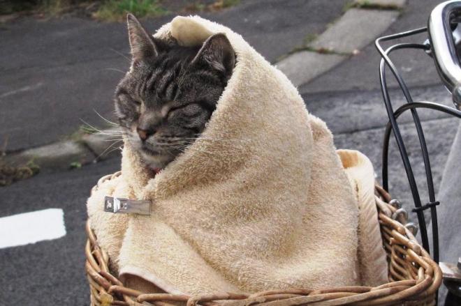 北海道での撮影中、寒さを和らげるため毛布に巻かれたキャベツ。ビジュアルのかわいらしさが映画の名シーンにもつながった