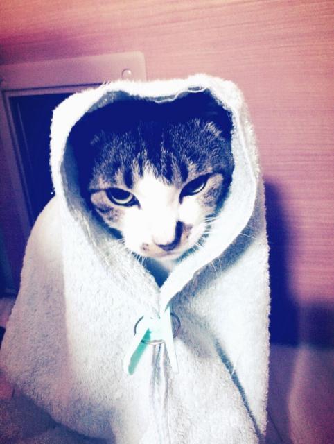 佐藤健さんの公式LINEに投稿された実家の飼い猫「こちろー」の写真