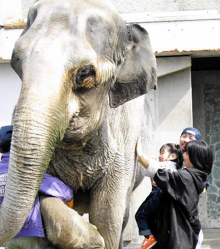 はな子に初めて触り、子どもたちは大喜び=2003年、井の頭自然文化園