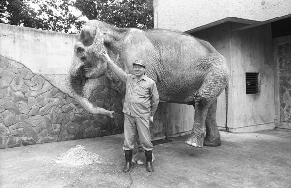 耳に触られても片脚をあげて、安心しきった表情のはな子=1988年撮影、井の頭自然文化園提供