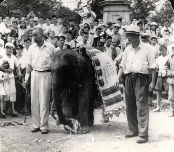 1949年9月4日、上野動物園に着いたはな子(井の頭自然文化園提供)