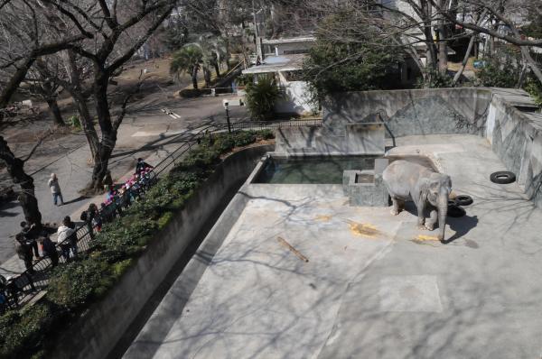 はな子の運動場。見物客との間は空堀。奥に水浴びのためのプールがある=2013年3月