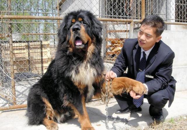 チベット犬と飼い主=2005年4月・北京