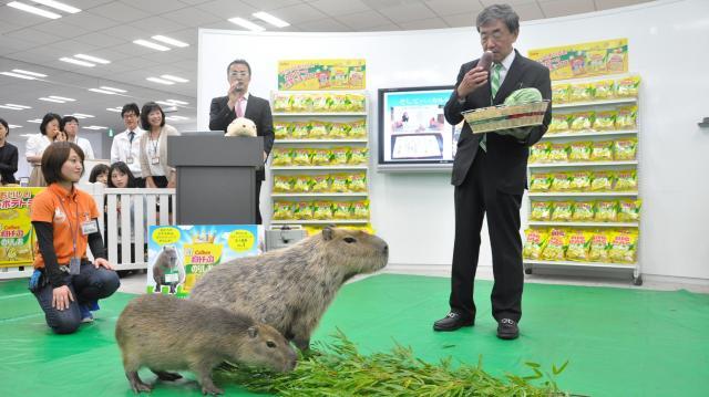 「男性も、女性も、動物も、ダイバーシティーをどんどん進めていきたい」と宣言する松本晃会長兼CEO