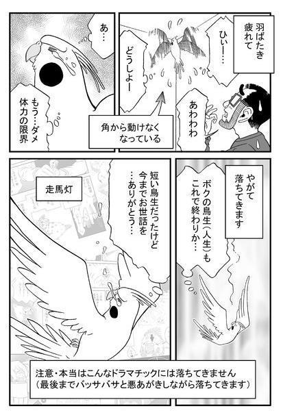 漫画「いいちこインコ」