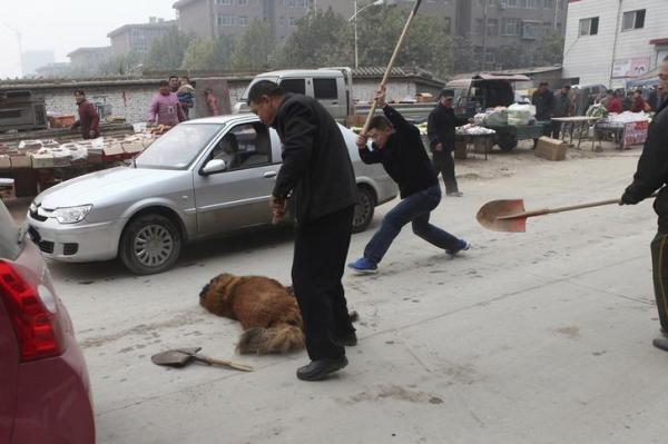 人に嚙み付きけがをさせたチベット犬を襲う人々=中国・河北省石家荘市、2013年11月、ロイター