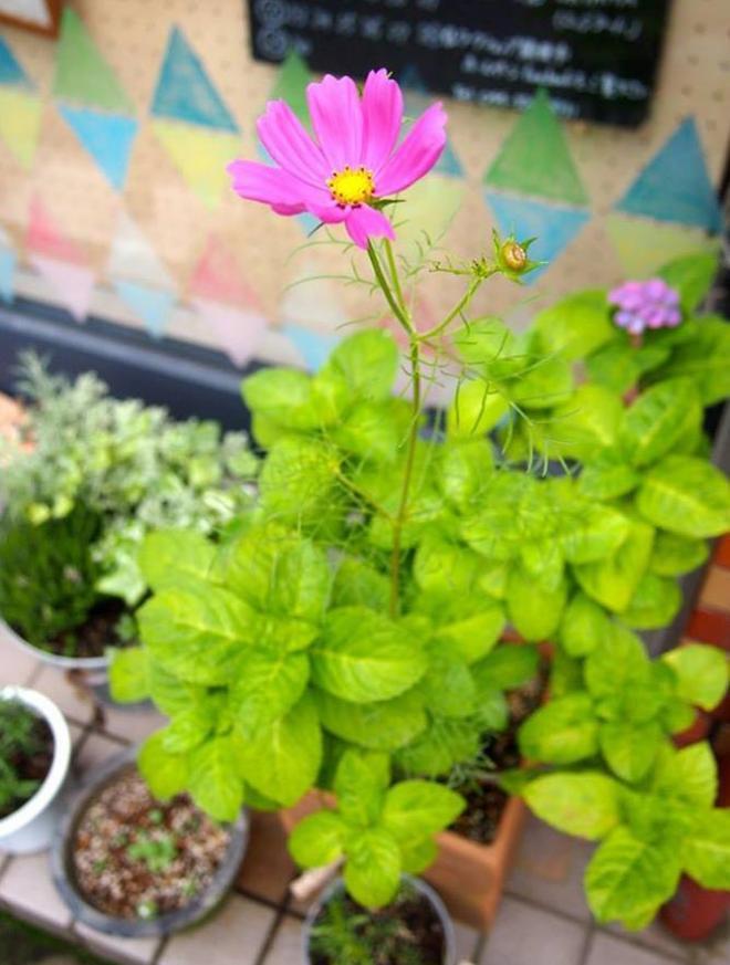 鉛筆を植えて咲いた花