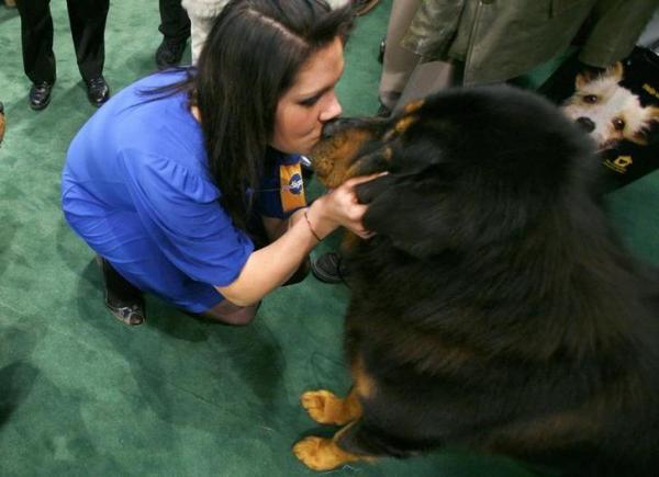ドッグショーに現れたチベット犬=ニューヨーク、2008年2月12日、ロイター