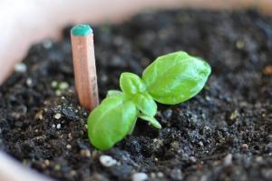 古鉛筆から花が咲く! 土に植えて発芽、ムダなく使える 特許も出願