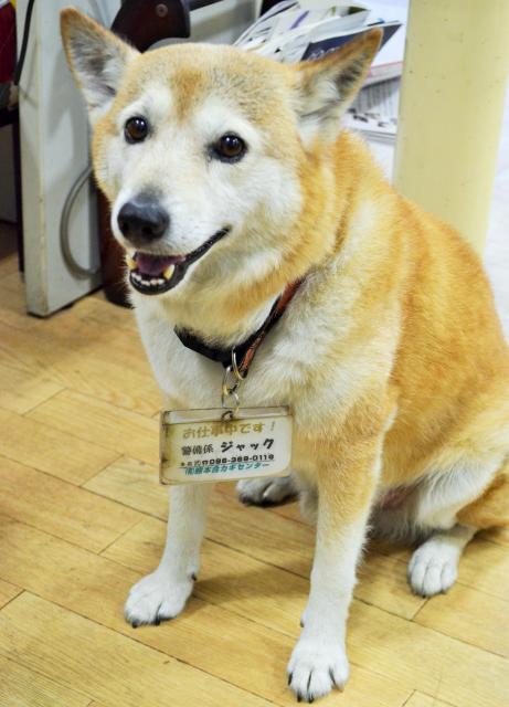 自分で自動ドアを開け、店を出入りするジャック=熊本市東区
