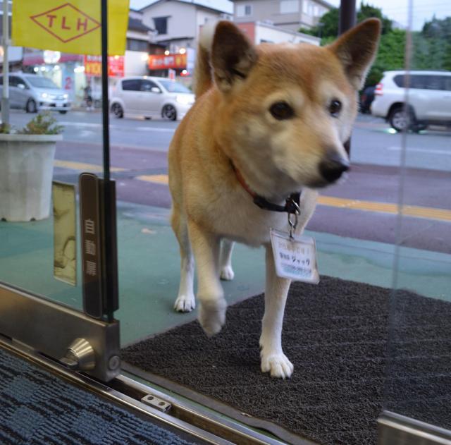 自動ドアを開け、店に入るジャック=熊本市東区
