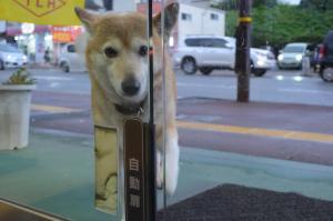自動ドアを前足タッチ…警備犬ジャックの出勤風景、被災地を癒やす