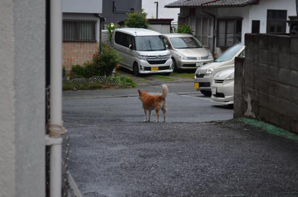 店の裏口から出て散歩をするジャック=熊本市東区