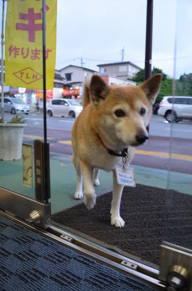 犬用ボタンを押し、ドアを開けるジャック=熊本市東区