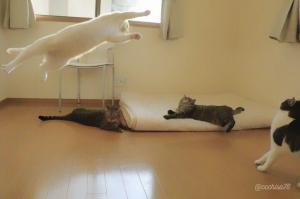 跳ぶミルコを見つめるお兄ちゃん・お姉ちゃん猫ズ。