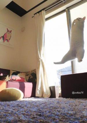跳び上がるミルコ。空中に浮かんでいるみたいです