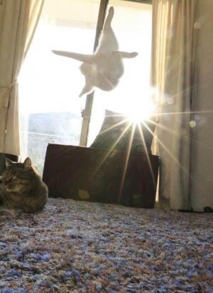 これまたアクロバティックな跳躍をみせるミルコです