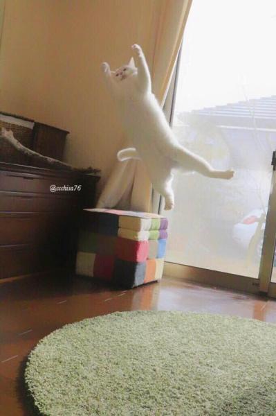 ミルコ!跳ぶにゃ~