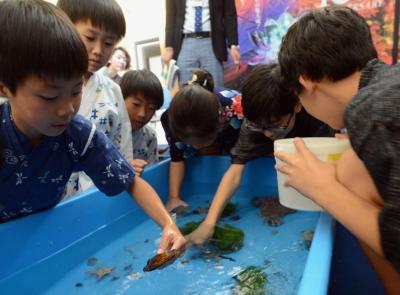 海の生き物を自分の手で捕まえる子どもたち